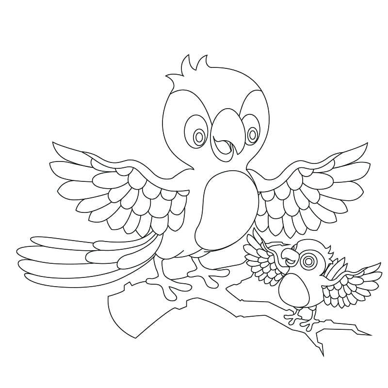 愛學人的鸚鵡 - 兒童著色圖下載